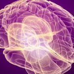 Scoperto nuovo meccanismo per bloccare i tumori cerebrali