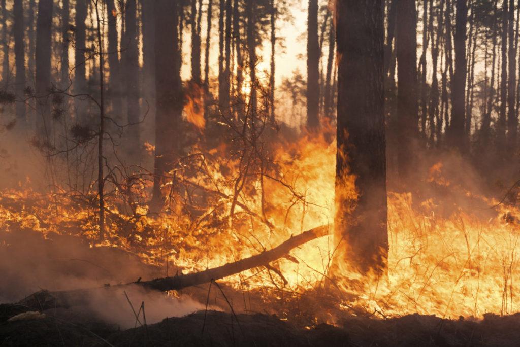 Incendi: un nuovo studio sulle previsioni stagionali
