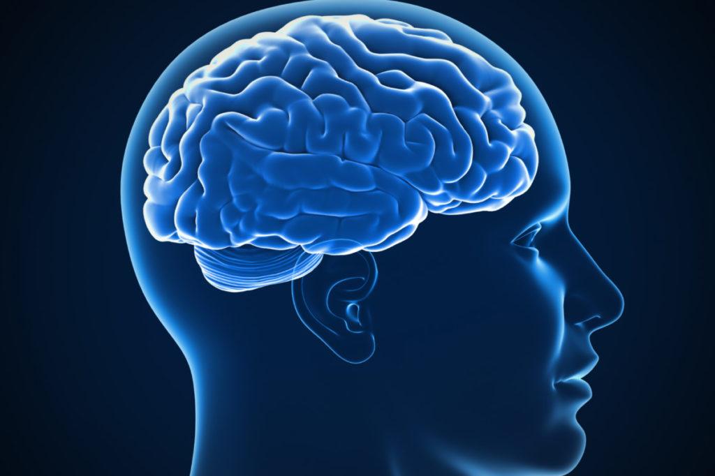 Scoperto un nuovo tipo di neurone umano
